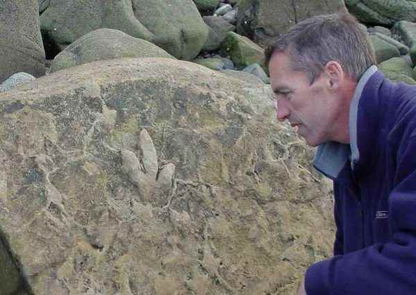 Fossils on the Isle of Sky